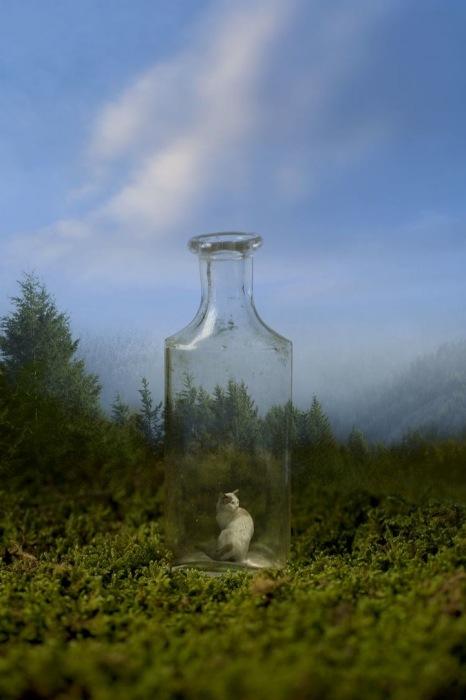 Кошка в бутылке: креативные фотоманипуляции Марка Янкуса