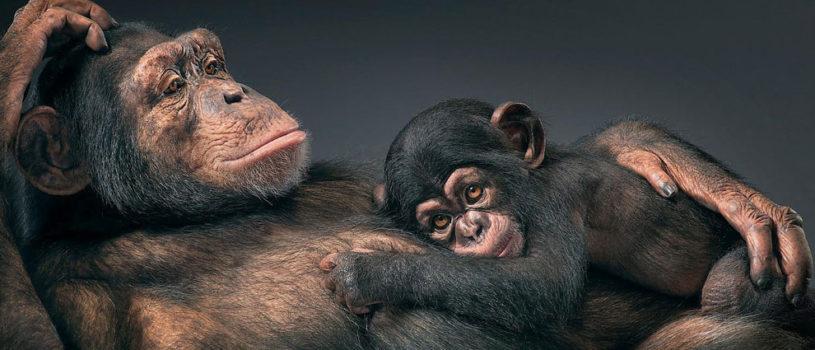Больше чем человек: Эмоции животных на фотографиях Тима Флака