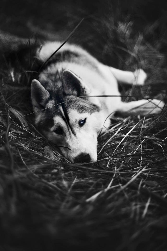 Фантазии женщины бегущей с волками в лесу 14