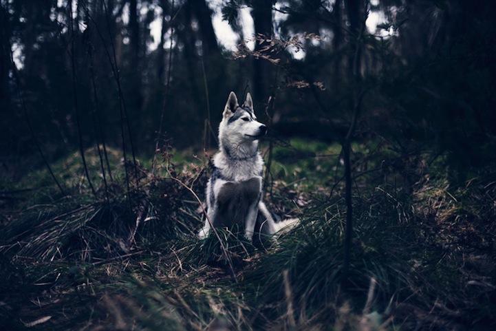 Фантазии женщины бегущей с волками в лесу 6
