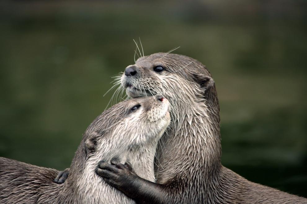 Захватывающие фотографии диких животных Британии 11
