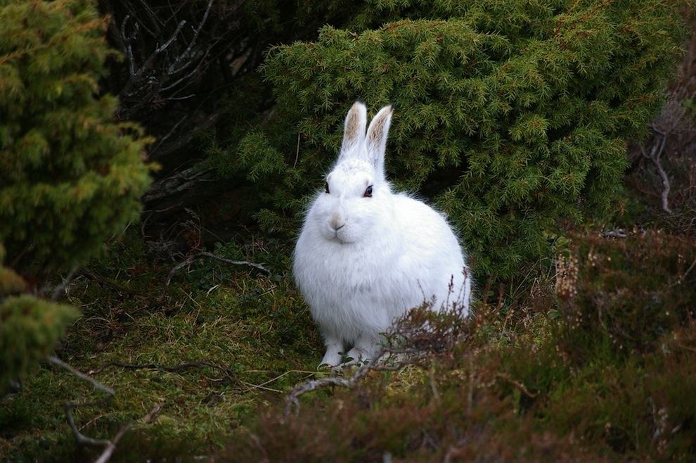 Захватывающие фотографии диких животных Британии 12