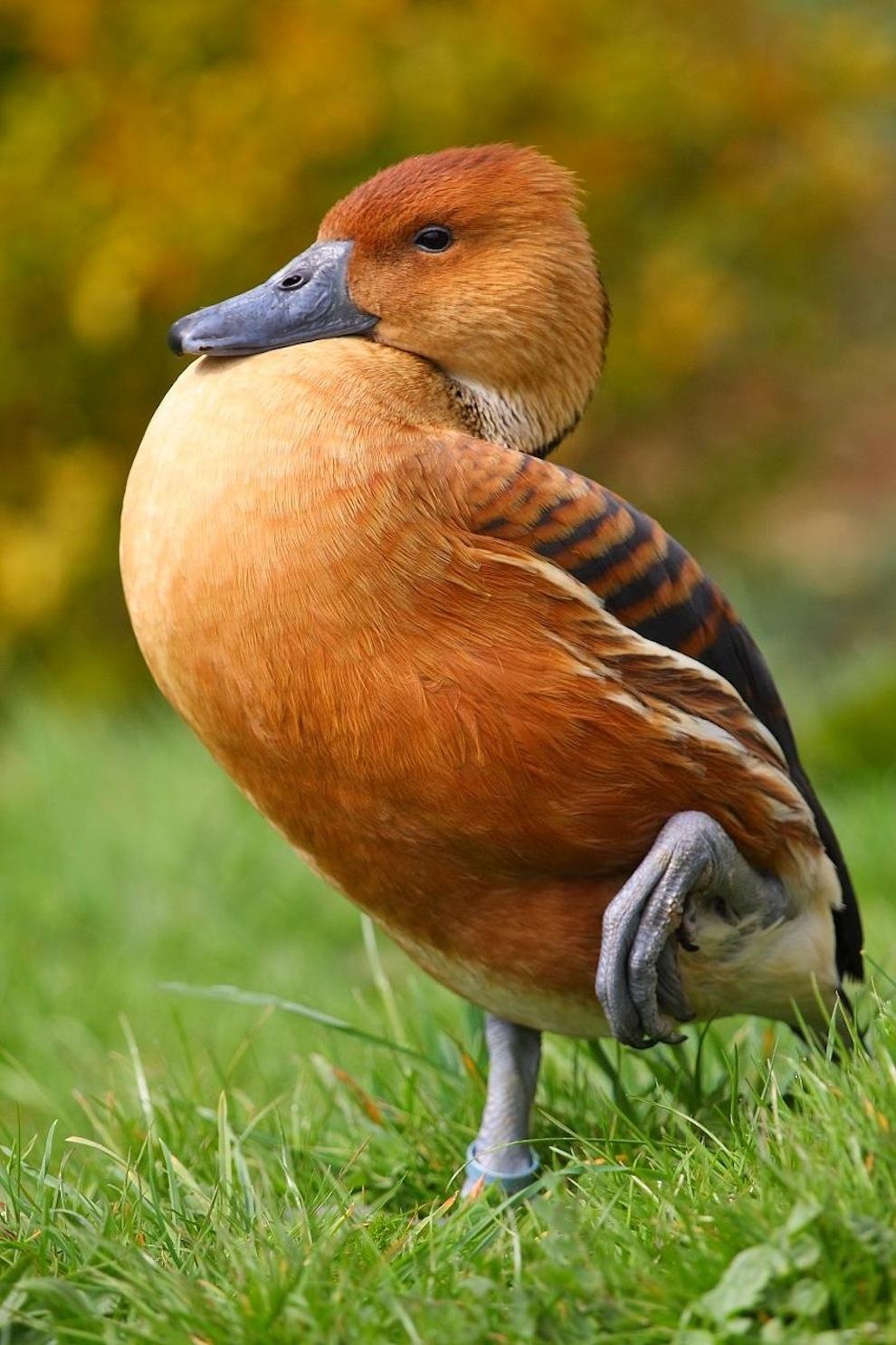 Захватывающие фотографии диких животных Британии 13