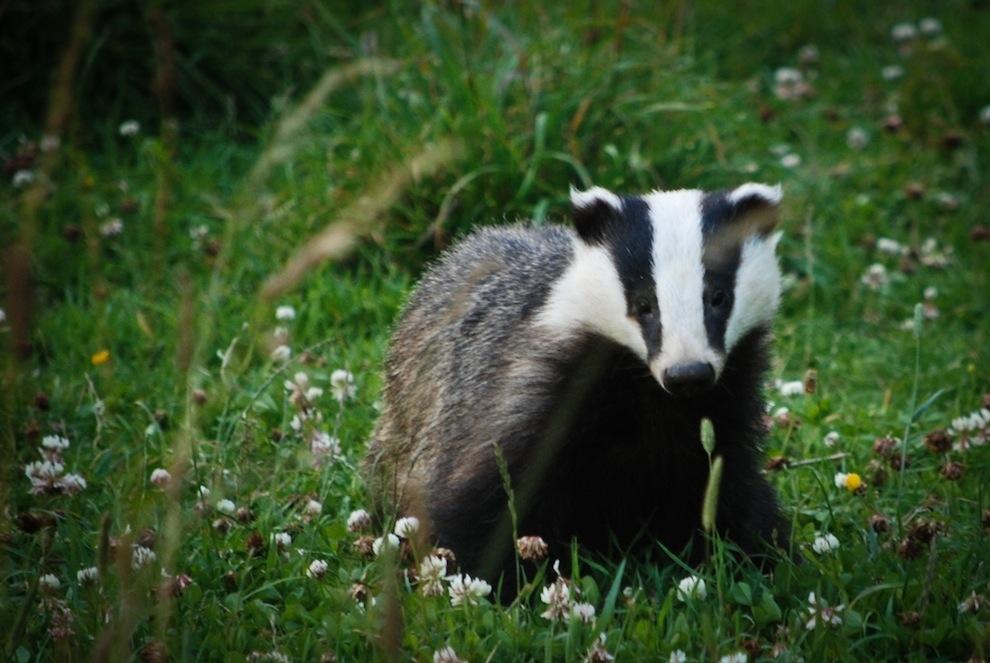 Захватывающие фотографии диких животных Британии 14