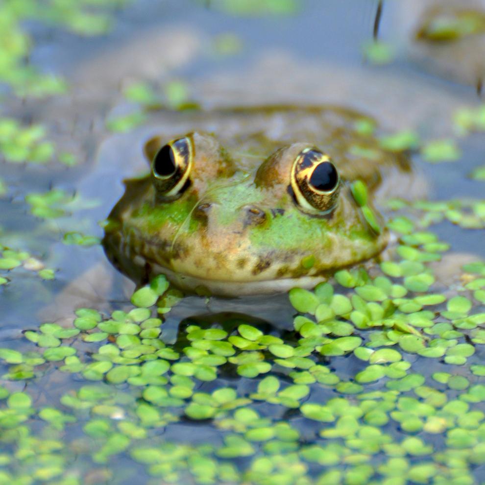 Захватывающие фотографии диких животных Британии 18