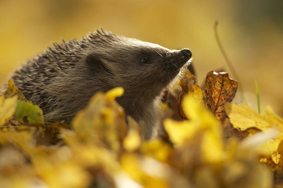 Захватывающие фотографии диких животных Британии 2