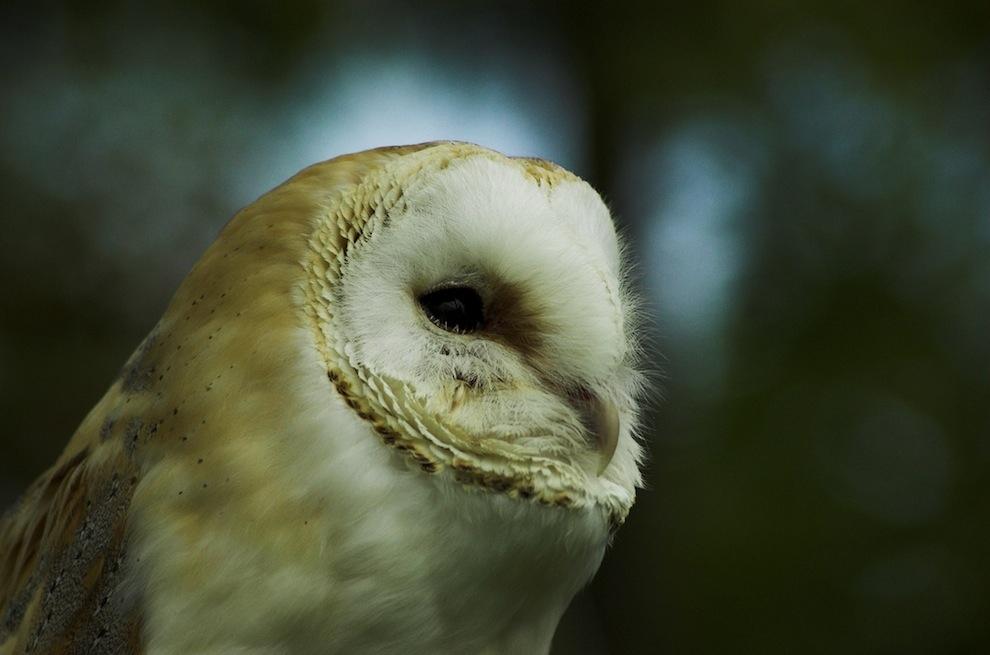 Захватывающие фотографии диких животных Британии 21