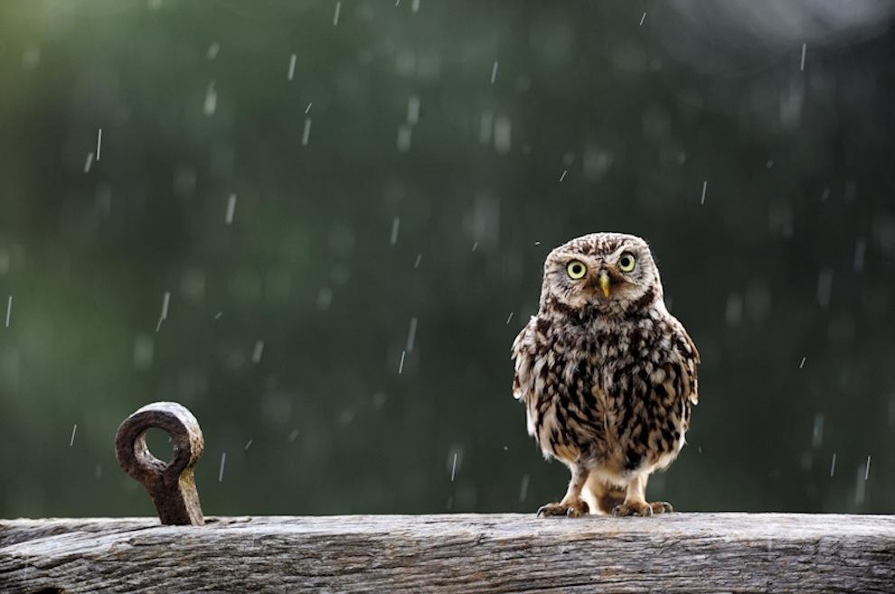 Захватывающие фотографии диких животных Британии 3