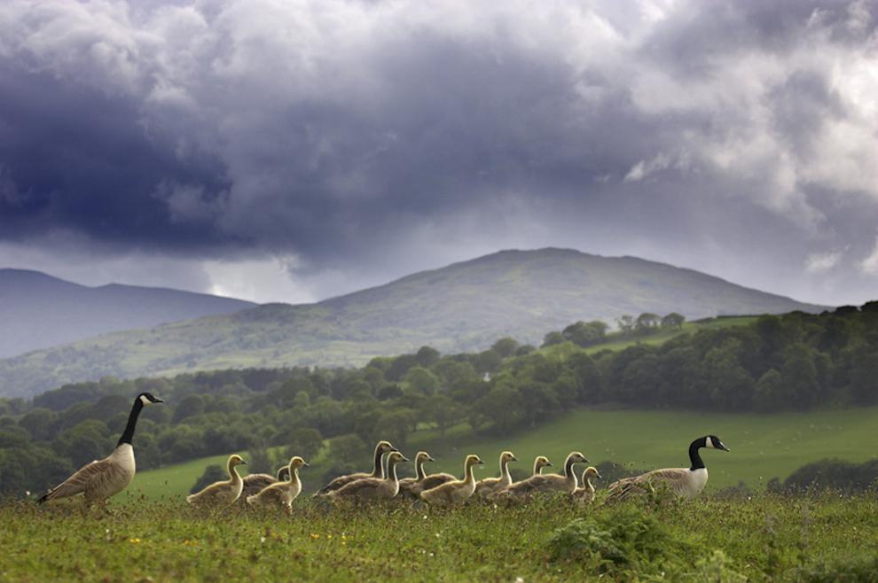 Захватывающие фотографии диких животных Британии 7