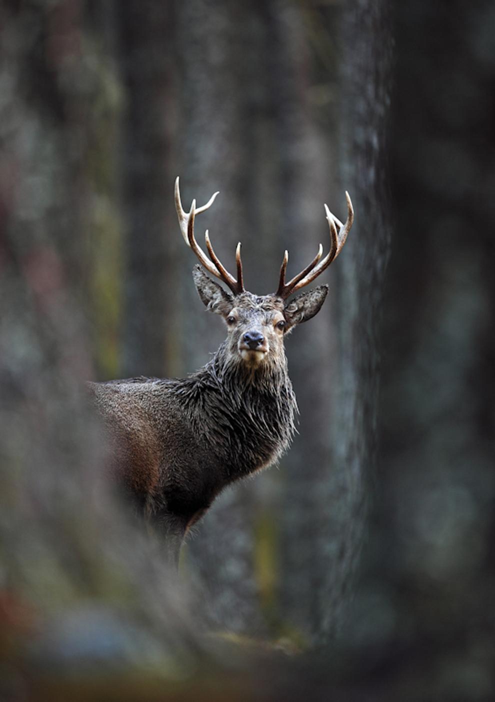 Захватывающие фотографии диких животных Британии 8
