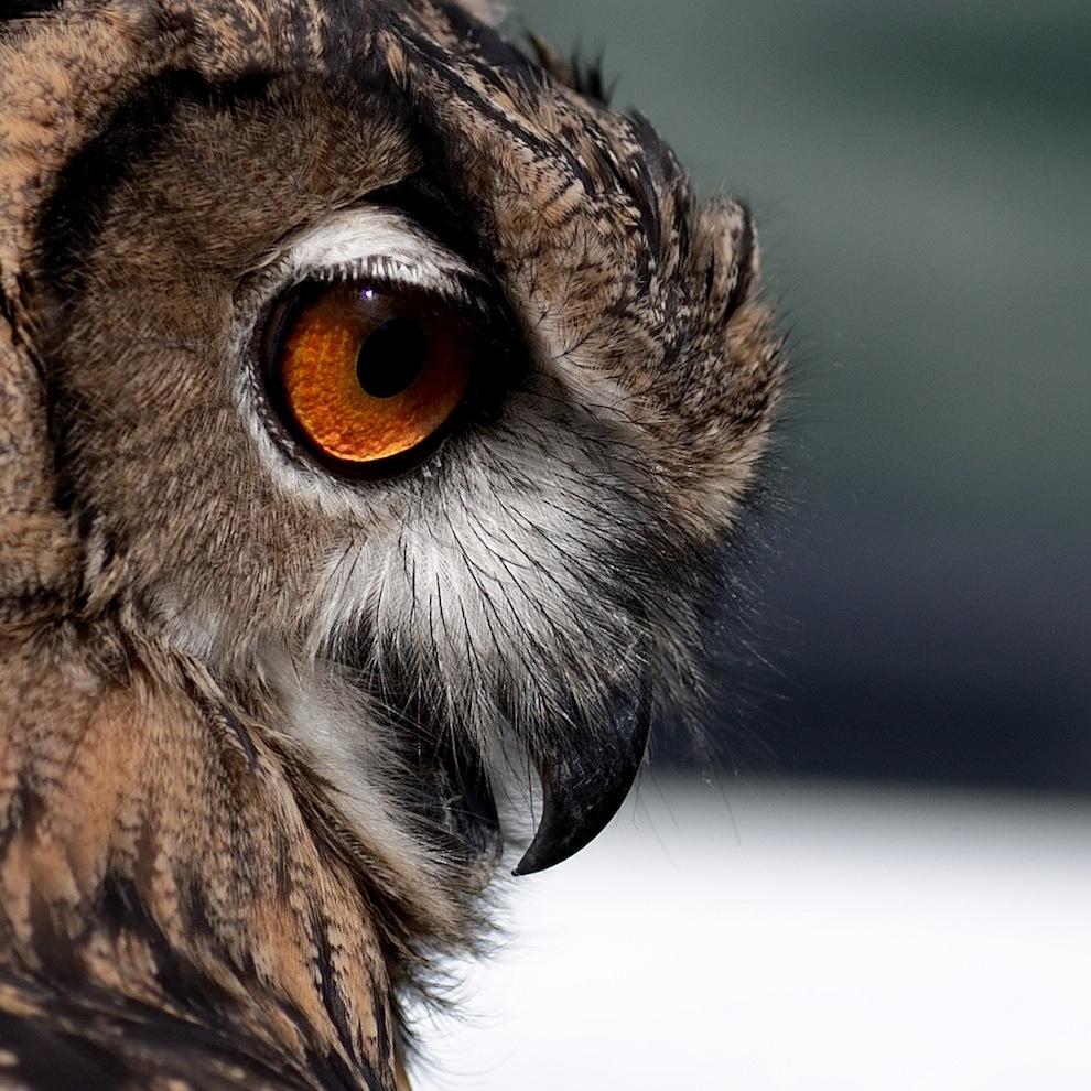 Захватывающие фотографии диких животных Британии 9