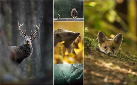 Захватывающие фотографии диких животных Британии