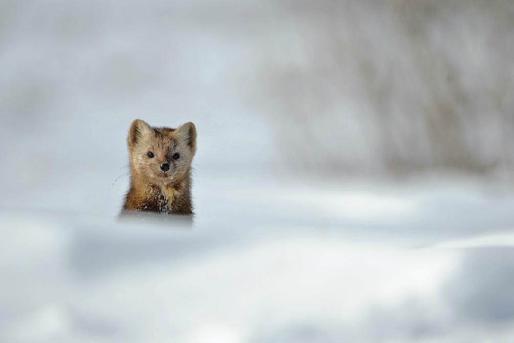 Дикая природа на фотографиях Сергея Горшкова