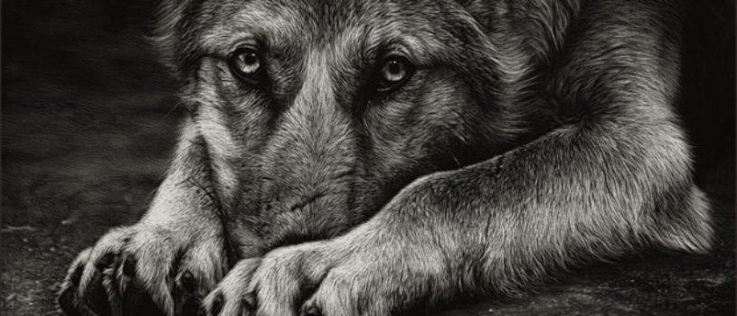 Реалистичные черно-белые портреты собак и волков, выскобленные на глине покрытой тушью