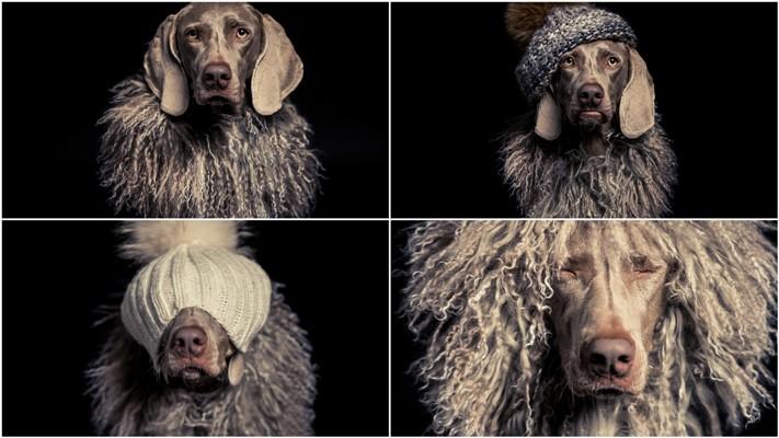 Замечательные портреты собак Роллана Андраша Флинта