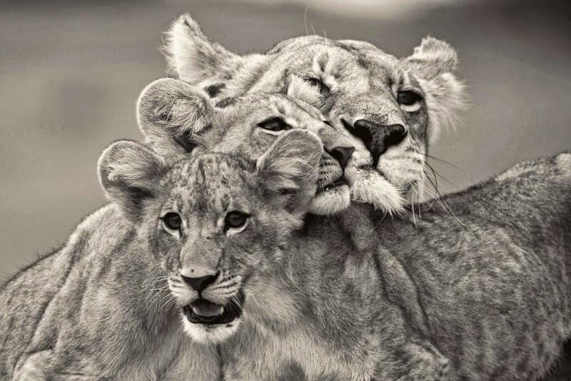 125 самых известных фотографий National Geographic