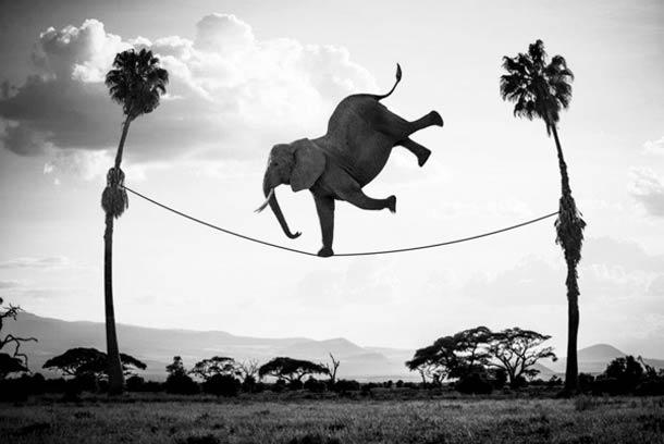 Акуна Матата - веселая жизнь животных в Кении  на фотографиях Томаса Сабтила