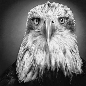 Прекрасные и реалистичные черно-белые рисунки животных