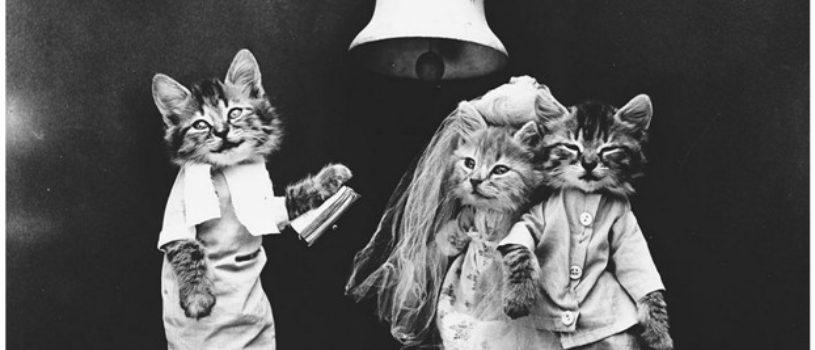 Кошки и собаки, одетые как люди, 100 лет назад