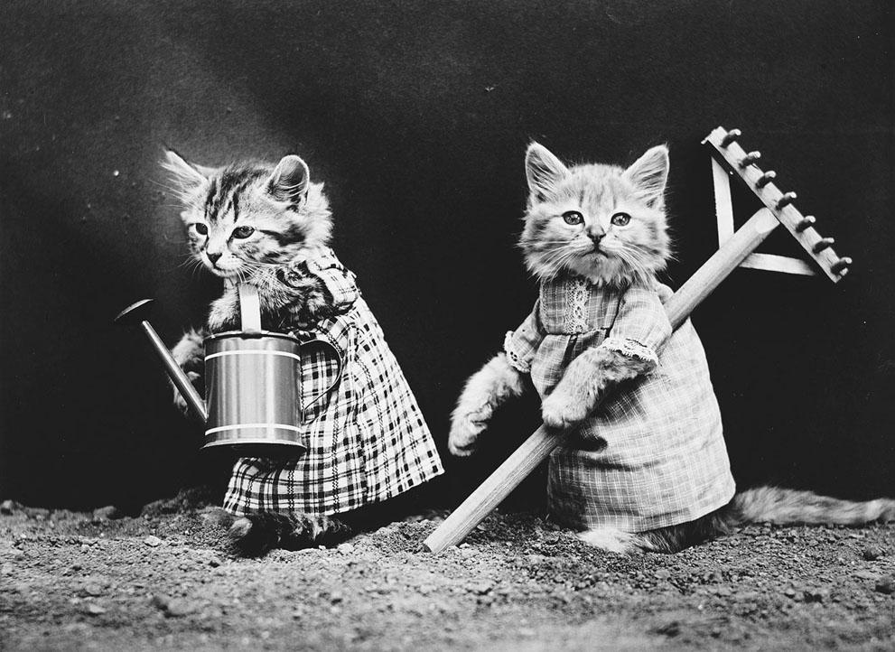 Кошки и собаки, одетые как люди, 100 лет назад10