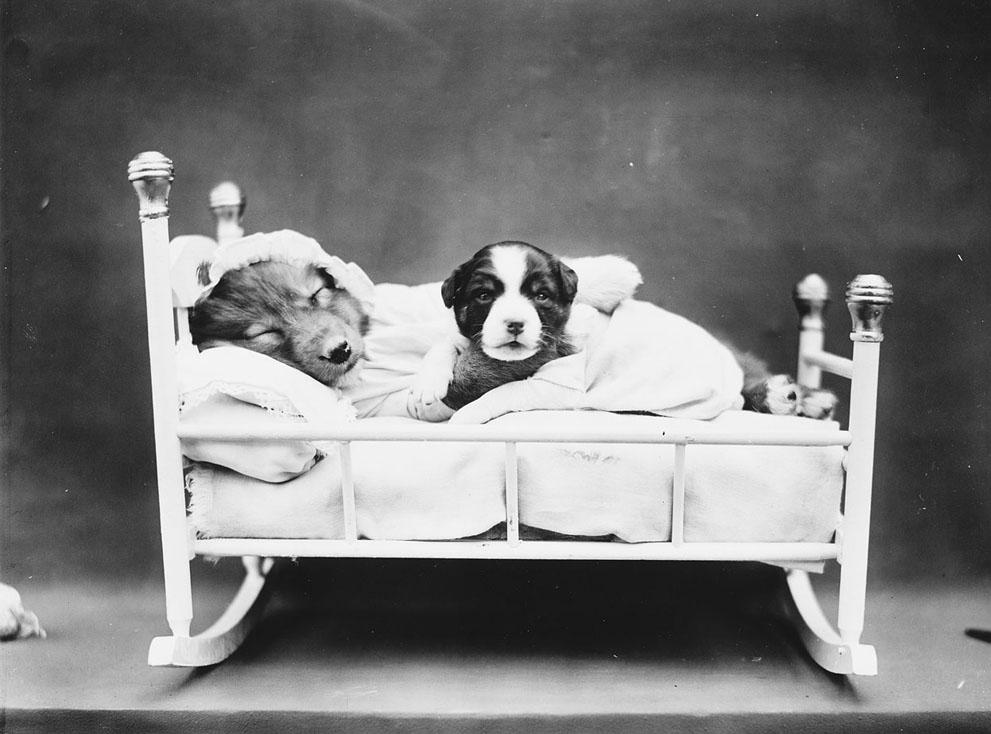 Кошки и собаки, одетые как люди, 100 лет назад11