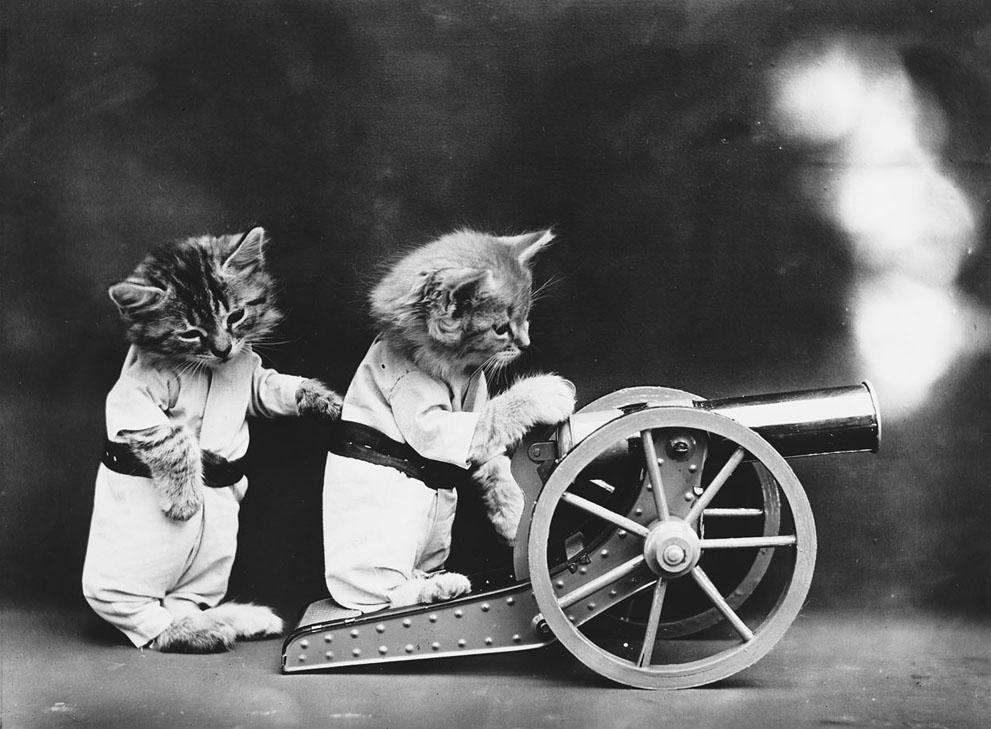 Кошки и собаки, одетые как люди, 100 лет назад12