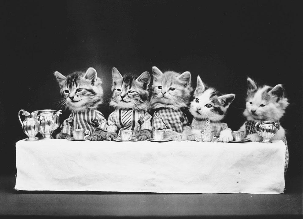 Кошки и собаки, одетые как люди, 100 лет назад14