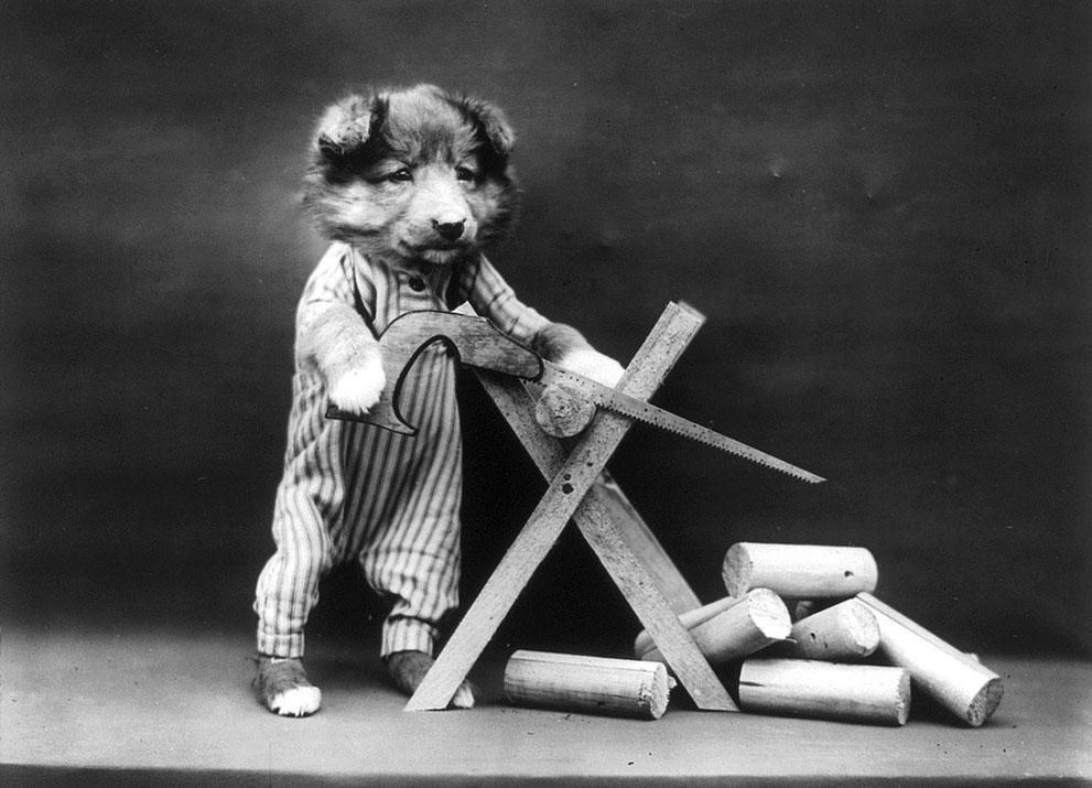 Кошки и собаки, одетые как люди, 100 лет назад15