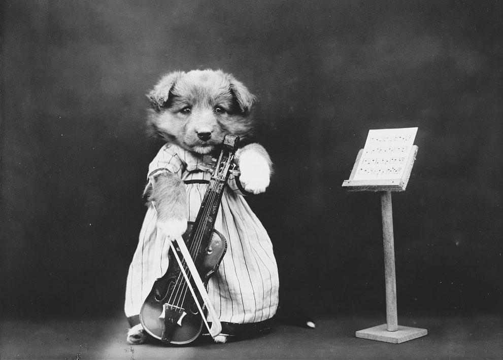 Кошки и собаки, одетые как люди, 100 лет назад3