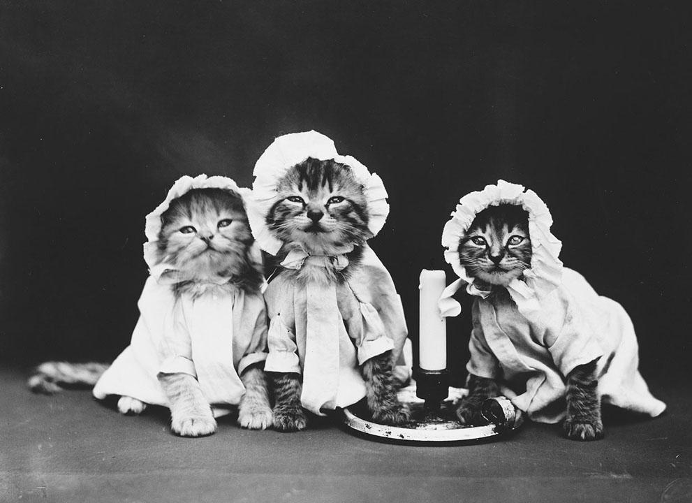 Кошки и собаки, одетые как люди, 100 лет назад4