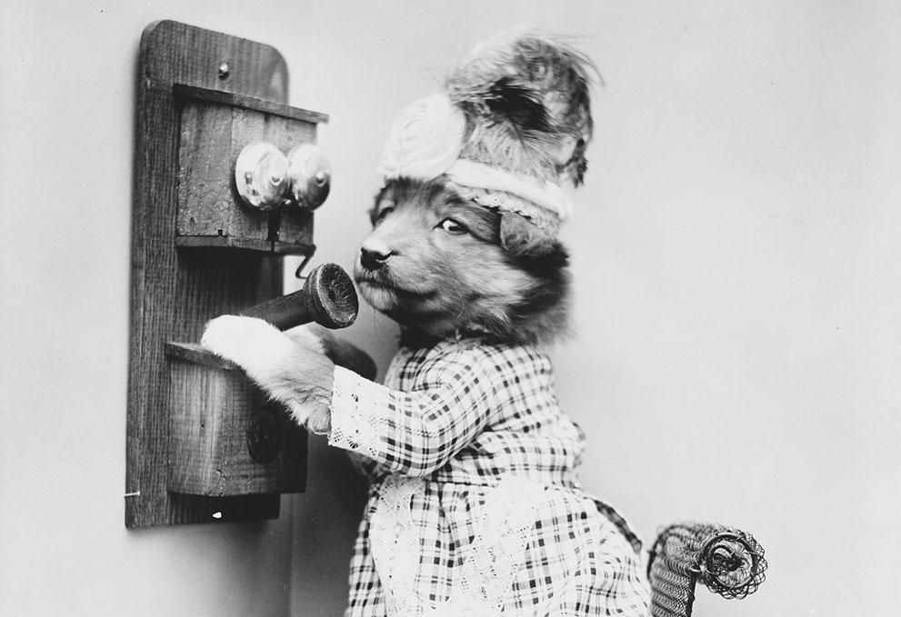 Кошки и собаки, одетые как люди, 100 лет назад5
