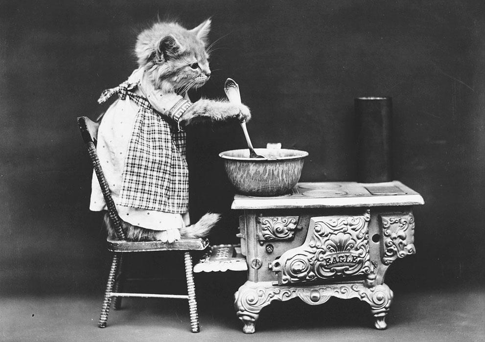 Кошки и собаки, одетые как люди, 100 лет назад6