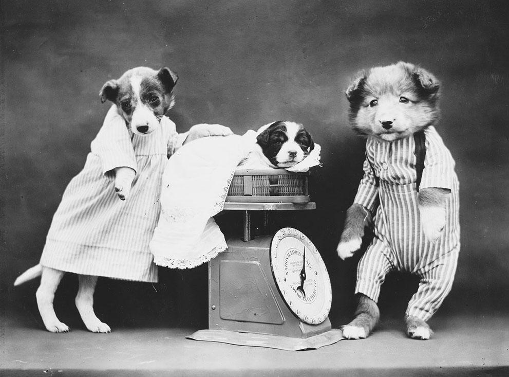 Кошки и собаки, одетые как люди, 100 лет назад7