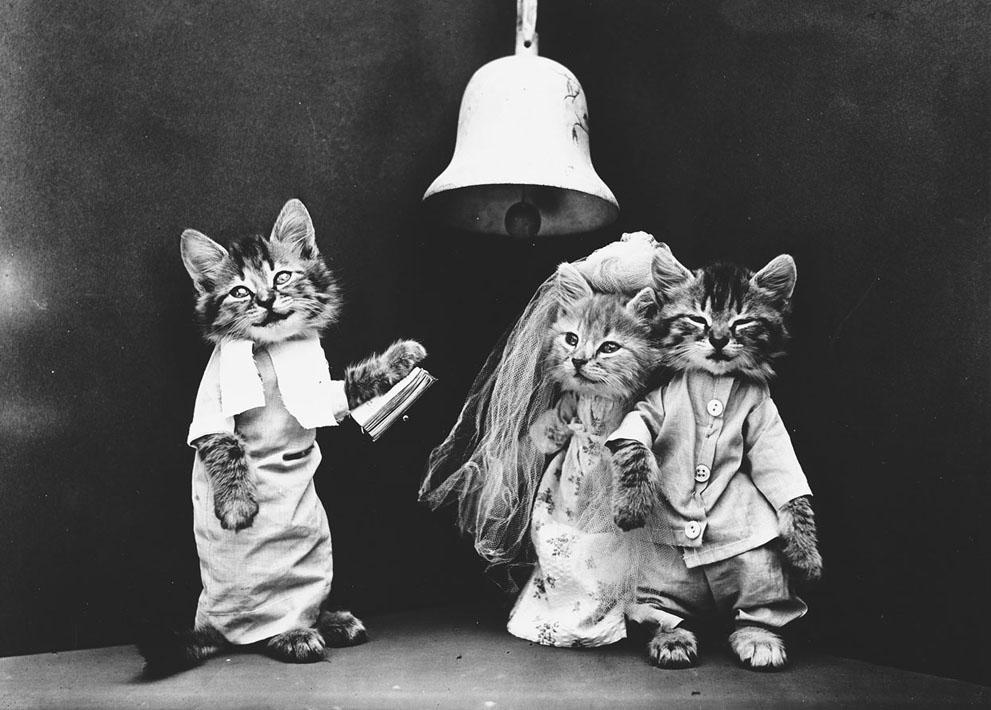 Кошки и собаки, одетые как люди, 100 лет назад8