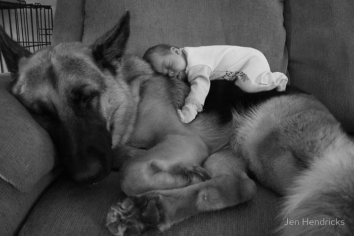 22 потрясающие фотографии дружбы больших собак и детей 1