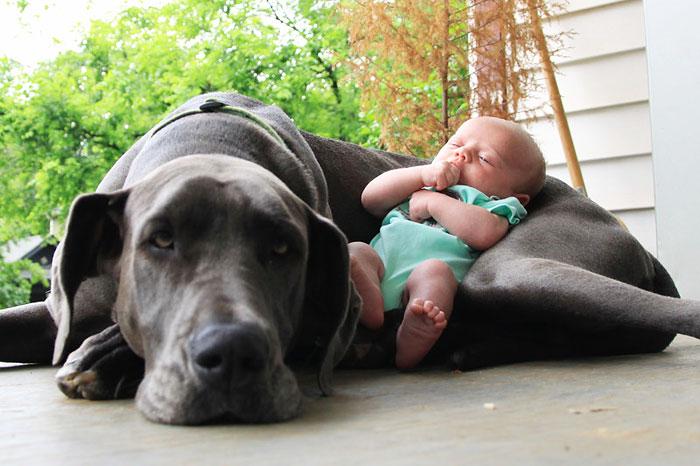 22 потрясающие фотографии дружбы больших собак и детей 10