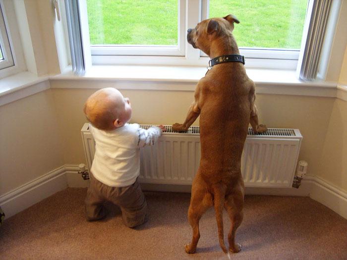 22 потрясающие фотографии дружбы больших собак и детей 11