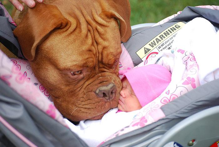 22 потрясающие фотографии дружбы больших собак и детей 13