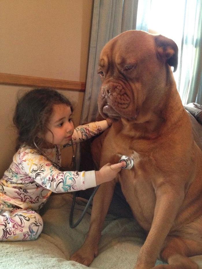 22 потрясающие фотографии дружбы больших собак и детей 14