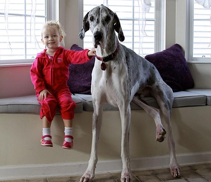 22 потрясающие фотографии дружбы больших собак и детей 16