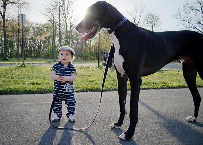22 потрясающие фотографии дружбы больших собак и детей 17