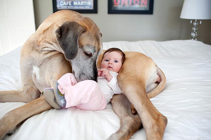 22 потрясающие фотографии дружбы больших собак и детей 18