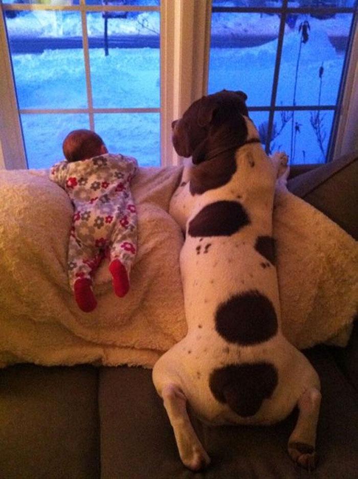 22 потрясающие фотографии дружбы больших собак и детей 2