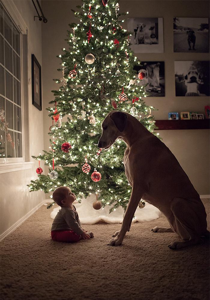 22 потрясающие фотографии дружбы больших собак и детей 21