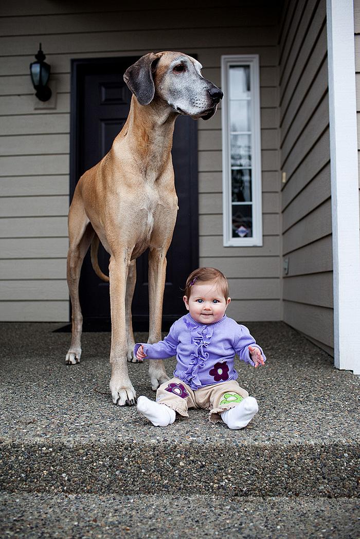 22 потрясающие фотографии дружбы больших собак и детей 22