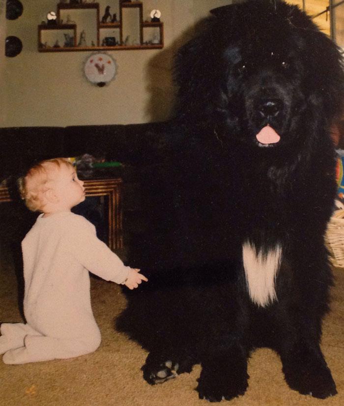 22 потрясающие фотографии дружбы больших собак и детей 4