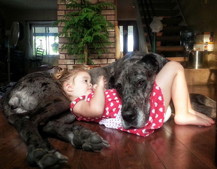 22 потрясающие фотографии дружбы больших собак и детей 5