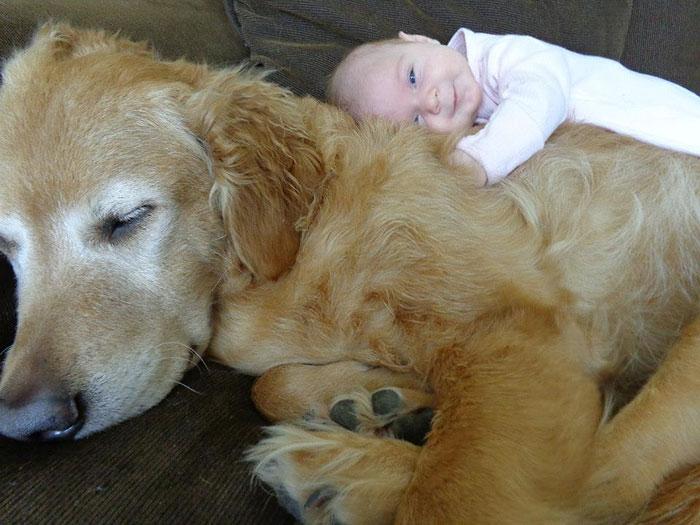 22 потрясающие фотографии дружбы больших собак и детей 6