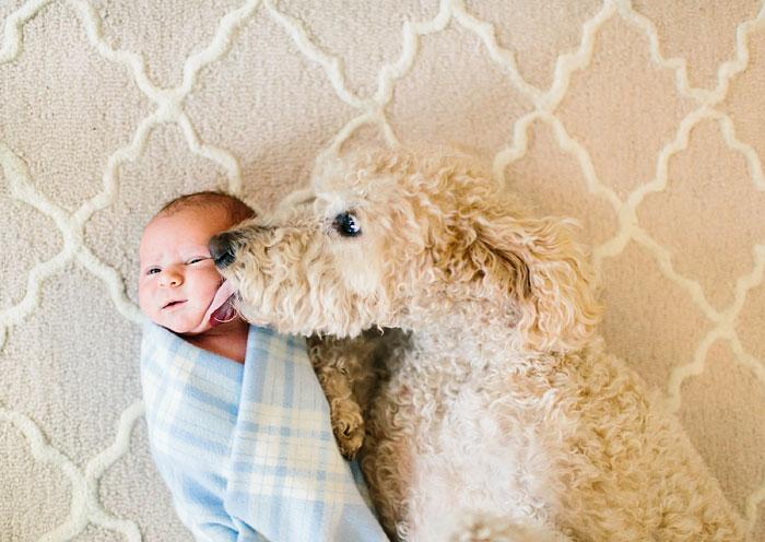 22 потрясающие фотографии дружбы больших собак и детей 7