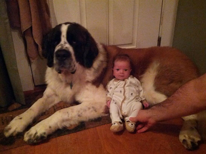 22 потрясающие фотографии дружбы больших собак и детей 8